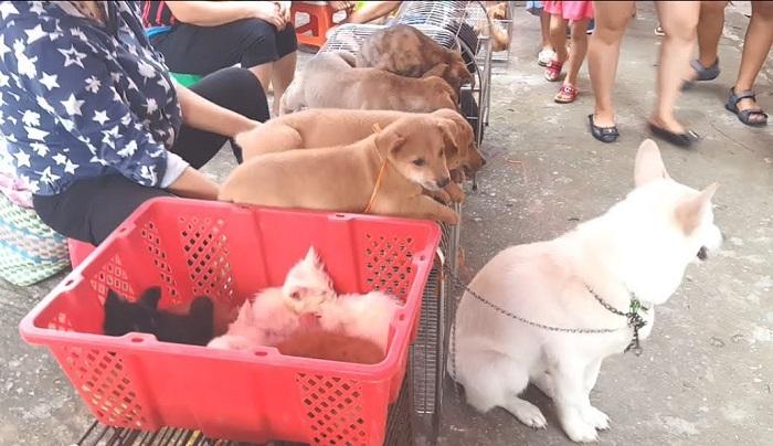 Những chú chó đáng yêu kéo du khách gần xa đến xem.