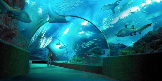 Thuỷ cung Siam Ocean World nổi tiếng nhất nhì ở đất Thái