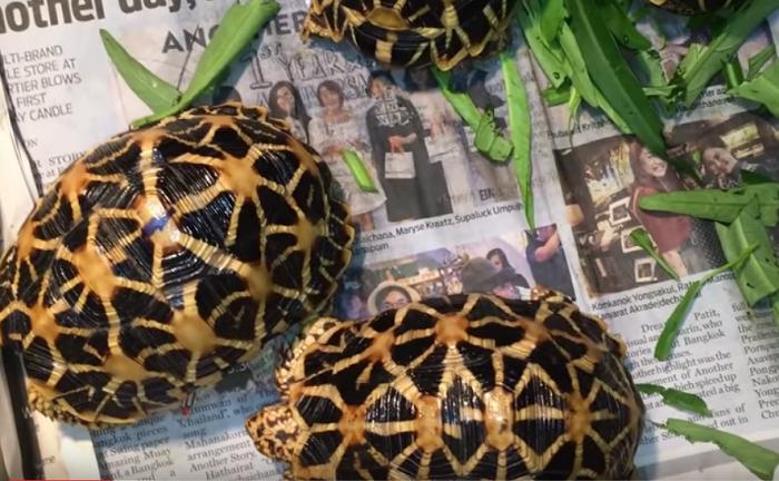 Những chú rùa đáng yêu rụt rè trong chiếc mai độc đáo.