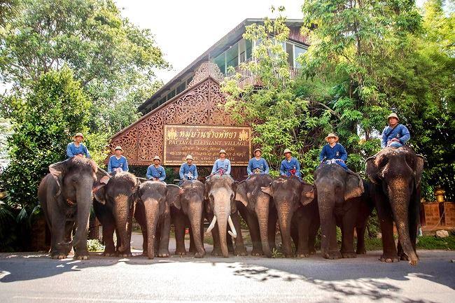Làng voi Pattaya
