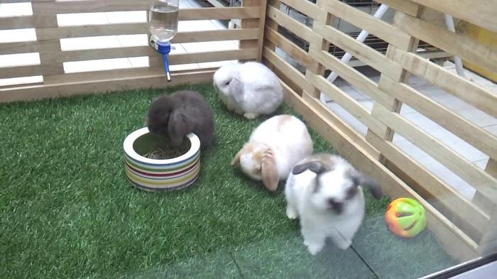 Những chú thỏ ngây ngô nhìn ngó khách đến thăm