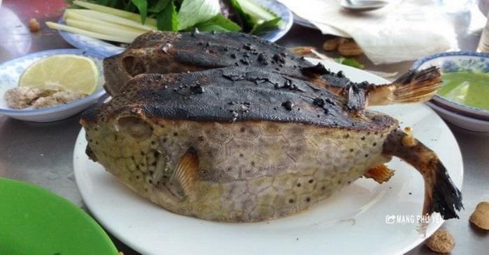 Cá bò hòm - thân hình xù xì, gai góc nhưng ngon, quý hiếm